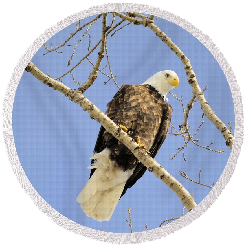Eagle Round Beach Towel featuring the photograph Watchful Eye by Bonfire Photography