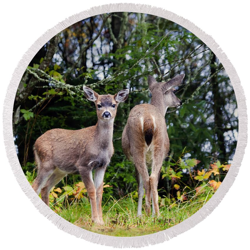 Deer Round Beach Towel featuring the photograph Watching Out For Mom by Mike Dawson