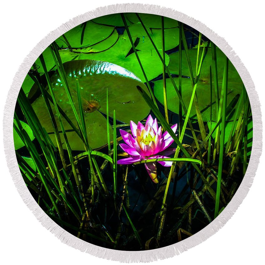 Lily Round Beach Towel featuring the photograph Water Lily 3 by Sherman Perry