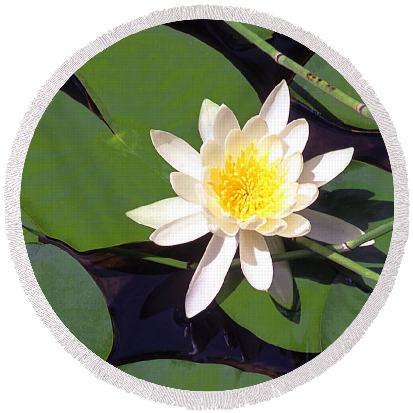 Lilies Round Beach Towel featuring the photograph Water Lily I I I by Jim Smith
