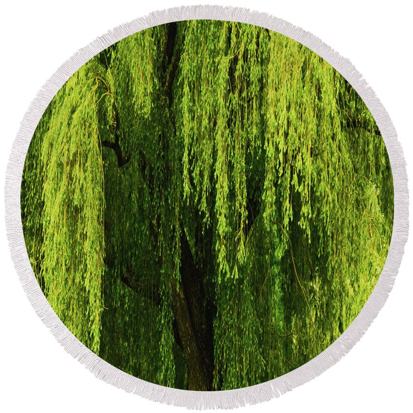 Weeping Willow Round Beach Towel featuring the photograph Weeping Willow Tree Enchantment by Carol F Austin