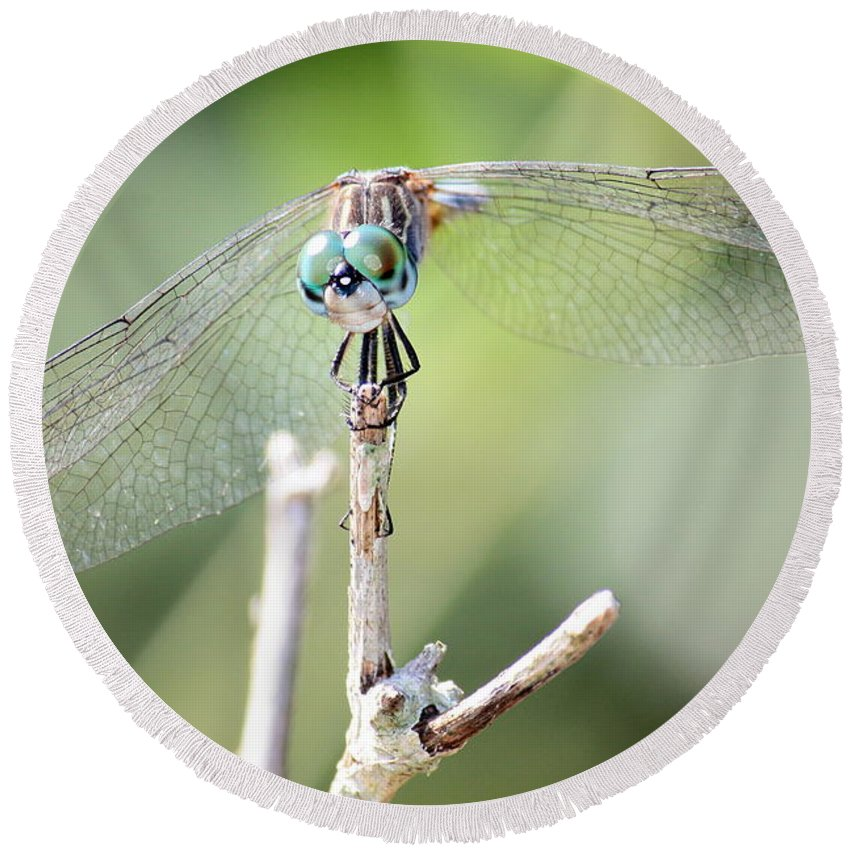 Macro Round Beach Towel featuring the photograph Welcome To My World Dragonfly by Carol Groenen