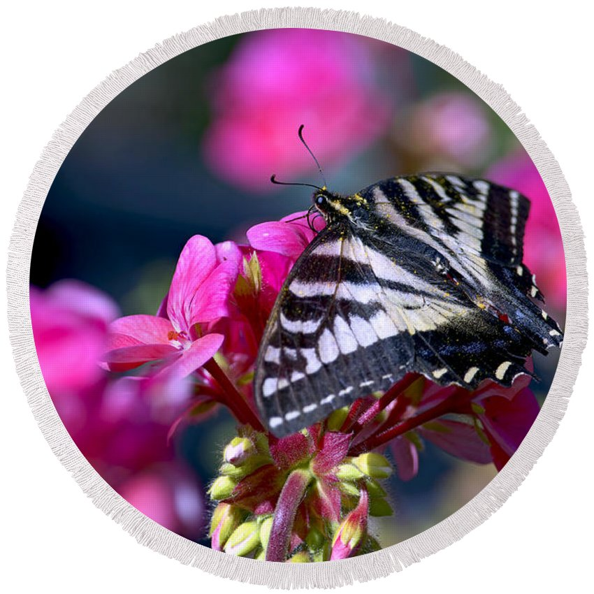 Tiger Swallowtail Butterfly Round Beach Towel featuring the photograph Western Tiger Swallowtail Butterfly On Geranium by Sharon Talson