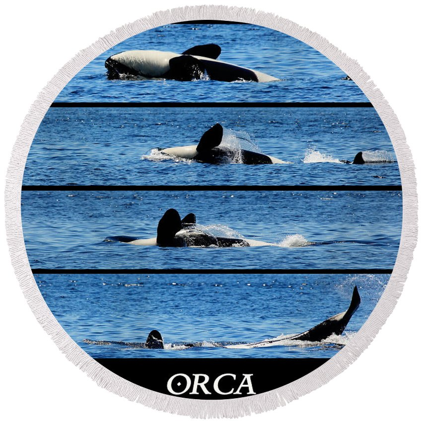 Whale Round Beach Towel featuring the photograph Whale Of A Time by Traci Law
