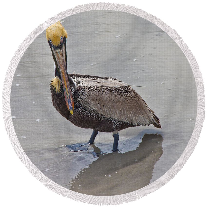 Pelican Round Beach Towel featuring the photograph What Are You Lookin At by Betsy Knapp