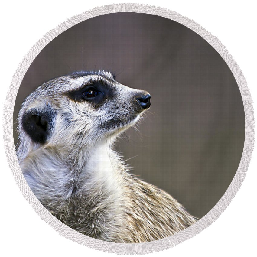 Meerkat Round Beach Towel featuring the photograph What Did I Do Now by Ken Frischkorn
