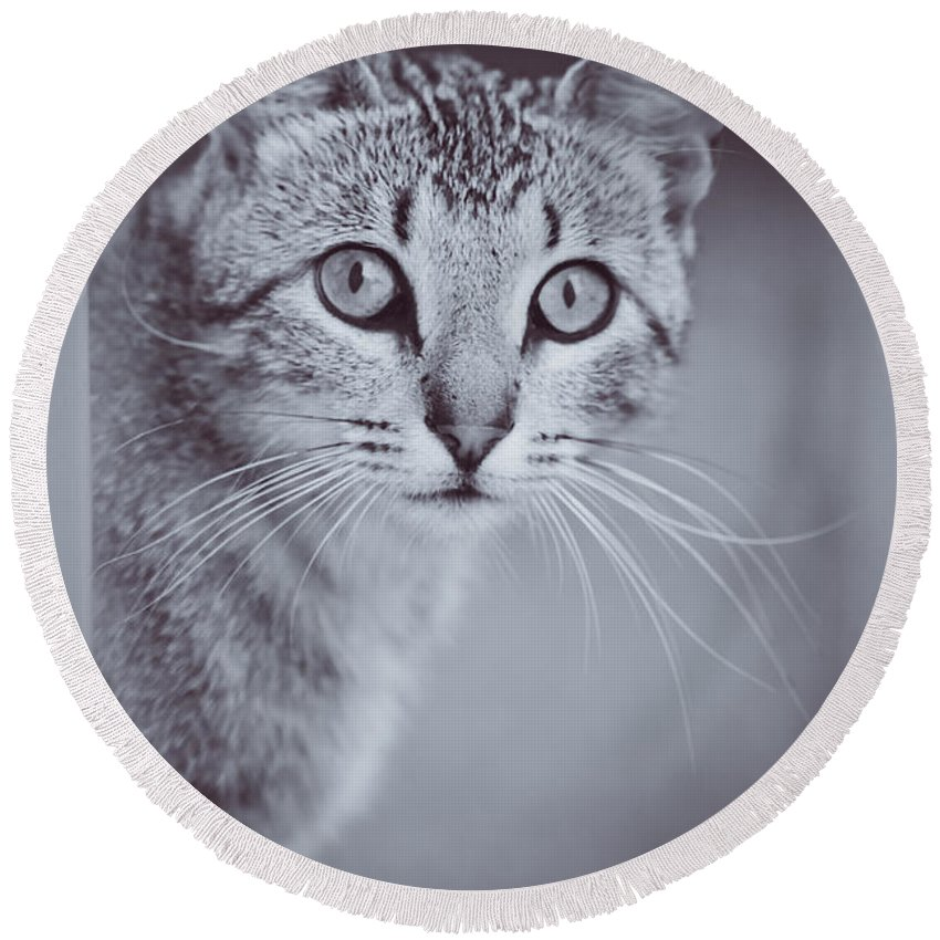 Kitty Round Beach Towel featuring the photograph What Eyes You Have by Kim Henderson