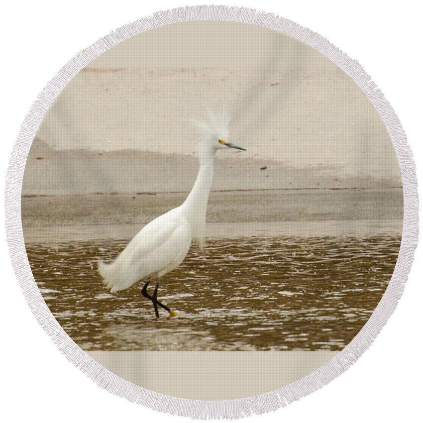 Bird Round Beach Towel featuring the photograph What Was That I Step On by Donna Brown