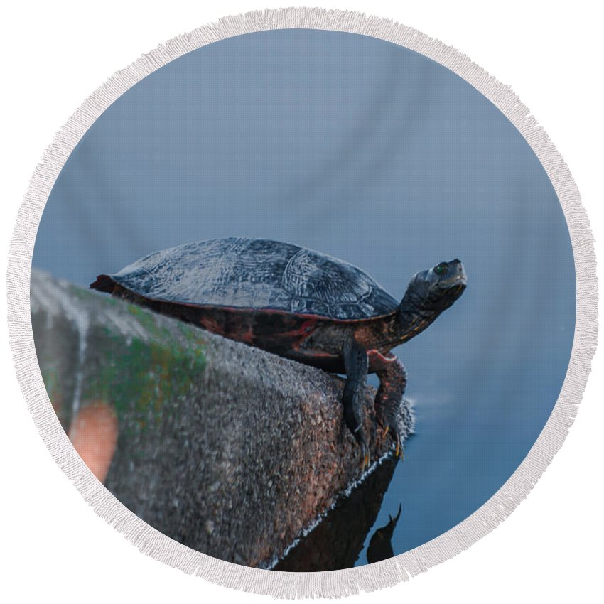 Turtle Round Beach Towel featuring the photograph What's Up by Scott Hervieux