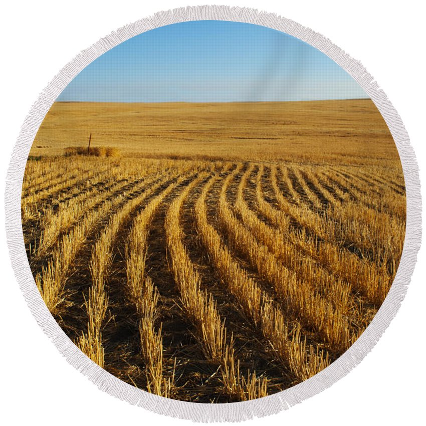 Color Image Round Beach Towel featuring the photograph Wheat Rows by Juli Scalzi