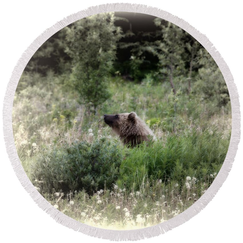 Bear Round Beach Towel featuring the photograph When Bears Dream by David Arment
