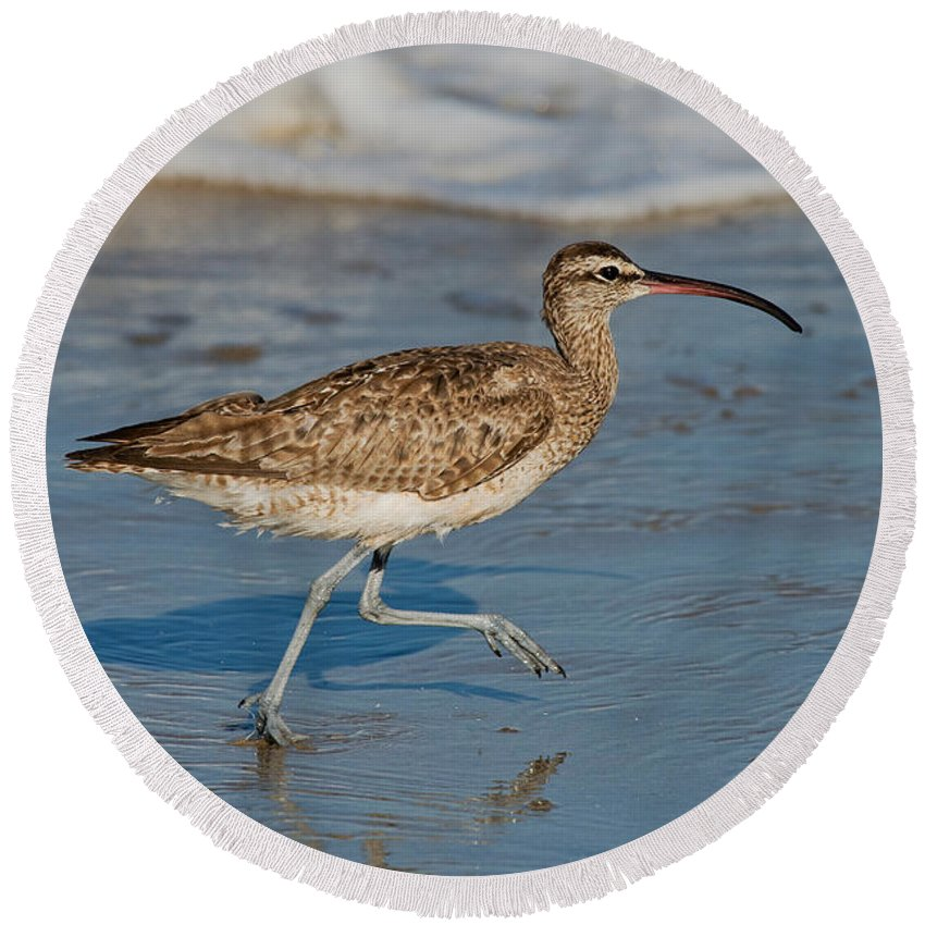 Fauna Round Beach Towel featuring the photograph Whimbrel Running by Anthony Mercieca