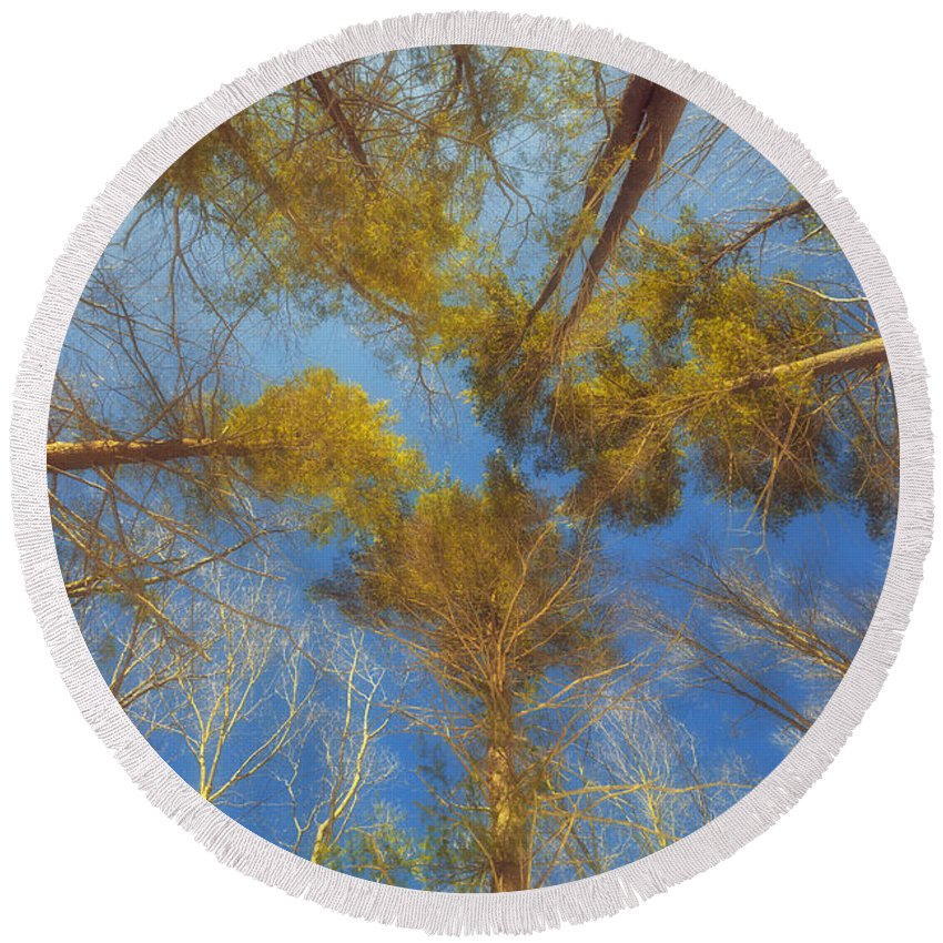 Trees Round Beach Towel featuring the photograph Whispering Trees by Valeriy Shvetsov