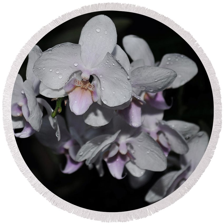 White Phalaenopsis Round Beach Towel featuring the photograph White And Pale Pink Phalaenopsis 165 by Terri Winkler