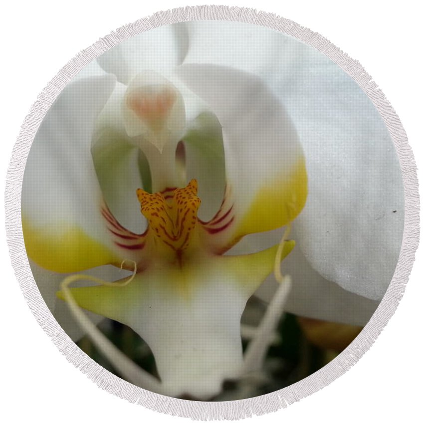 Orchid Round Beach Towel featuring the photograph White And Yellow Orchid by Caryl J Bohn