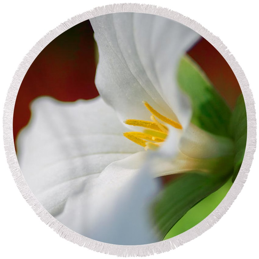 Trillium Round Beach Towel featuring the photograph White Beauty by Garvin Hunter
