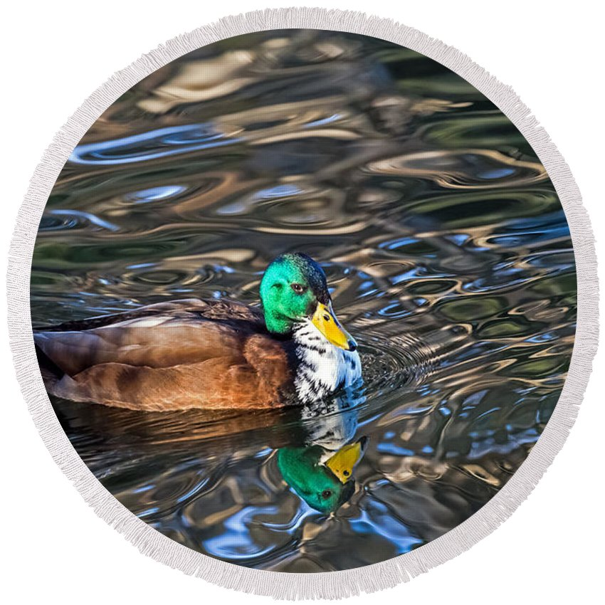 Anas Platyrhynchos Round Beach Towel featuring the photograph White-bibbed Mallard by Kate Brown