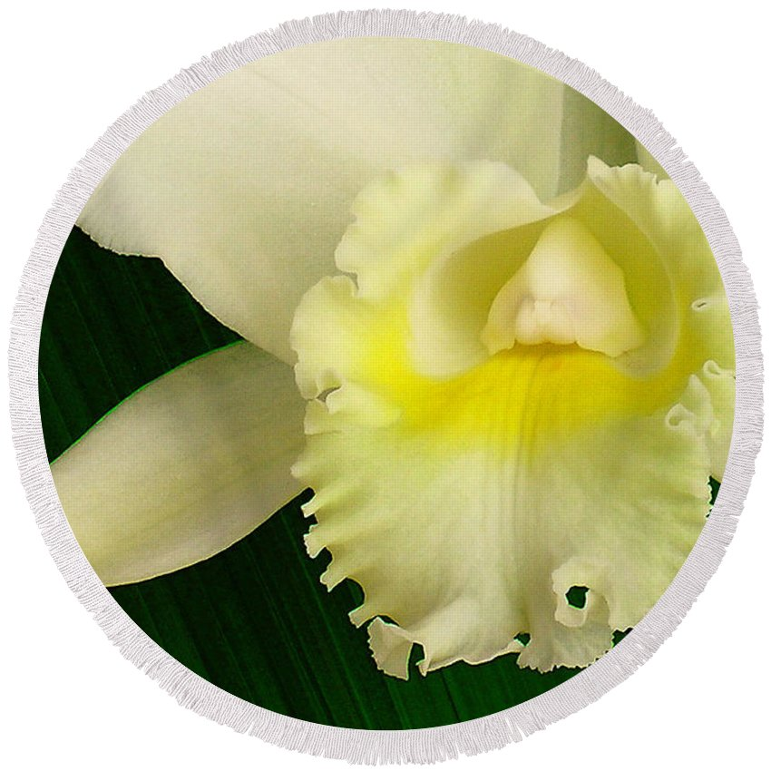 Hawaii Iphone Cases Round Beach Towel featuring the photograph White Cattleya Orchid by James Temple