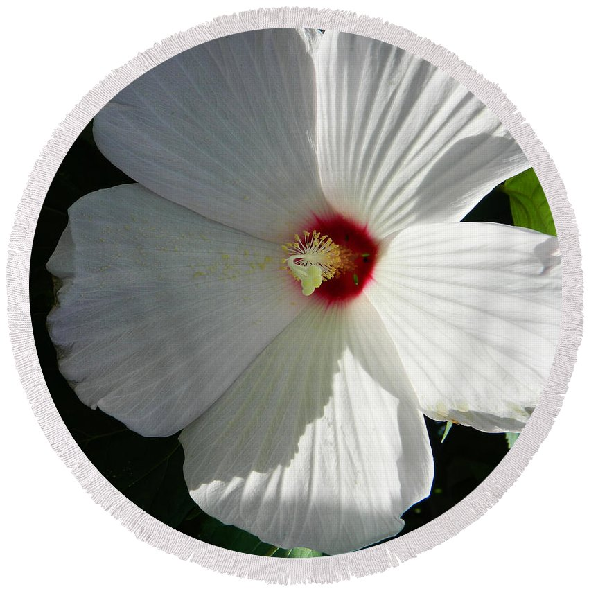 Nature Round Beach Towel featuring the photograph White Hibiscus by Andrea Anderegg