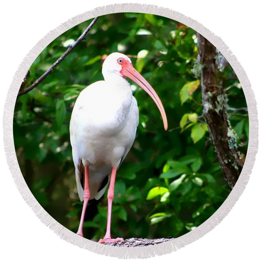 Florida Birds Round Beach Towel featuring the photograph White Ibis by Debra Forand