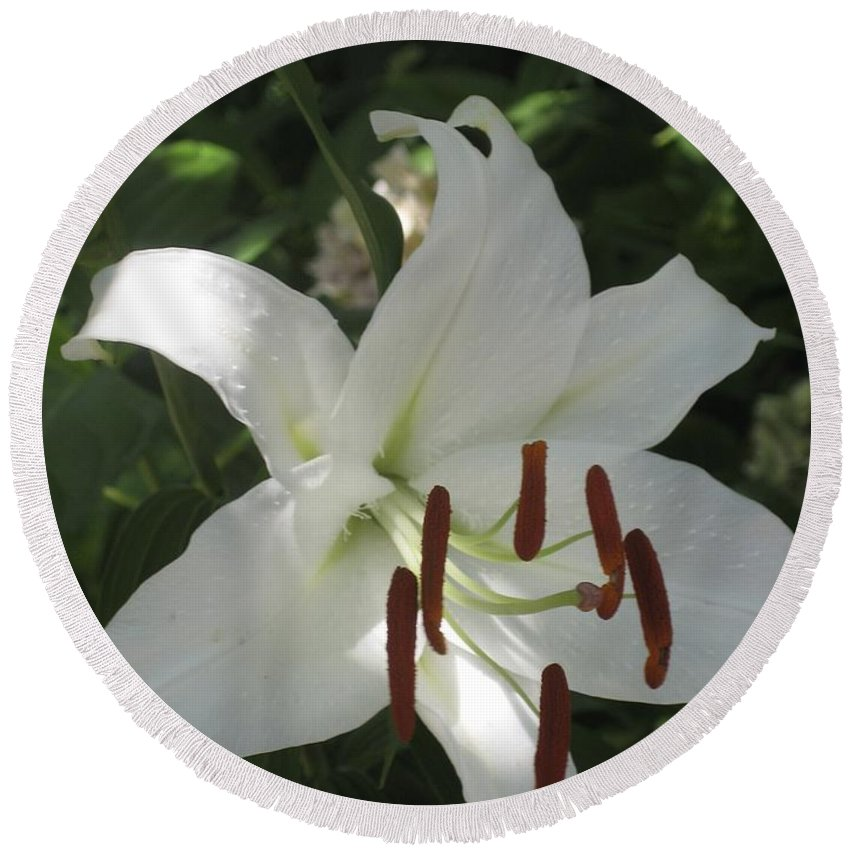 Flowers Round Beach Towel featuring the photograph White Lily by Hope VanCleaf