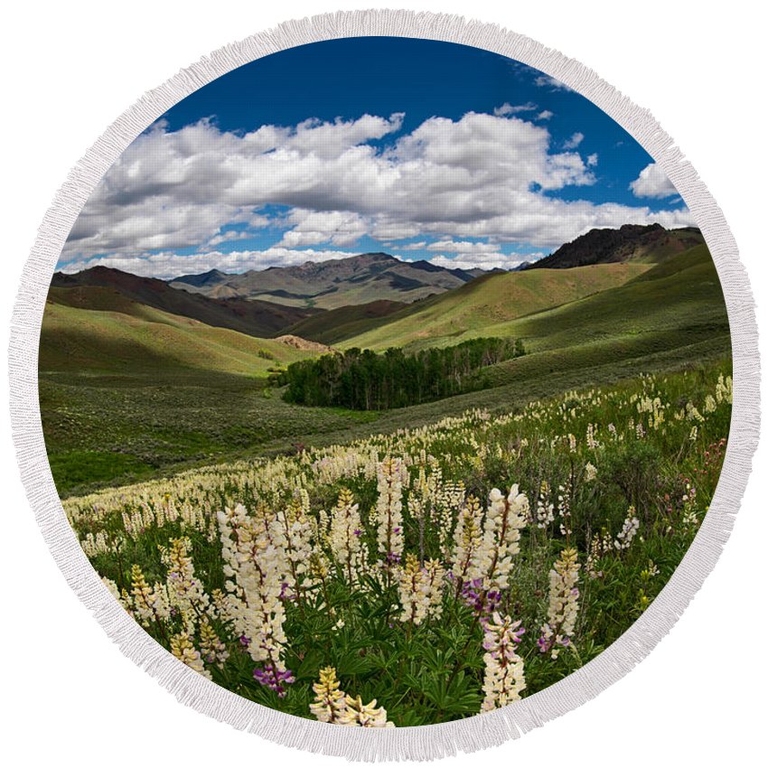Lupine Round Beach Towel featuring the photograph White Lupine by Leland D Howard