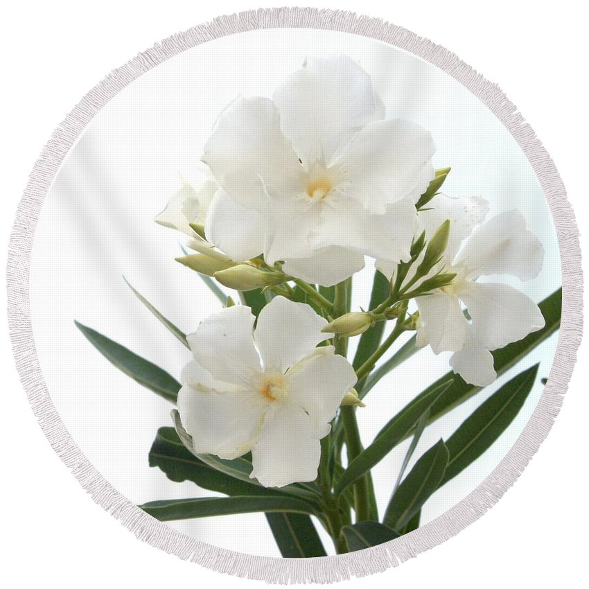 White oleander flowers close up isolated on white background round nerium oleander round beach towel featuring the photograph white oleander flowers close up isolated on white mightylinksfo