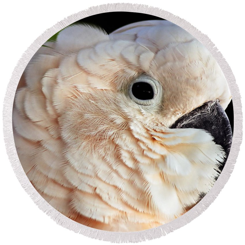 Beak Round Beach Towel featuring the photograph White Parrot by Ingrid Smith-Johnsen