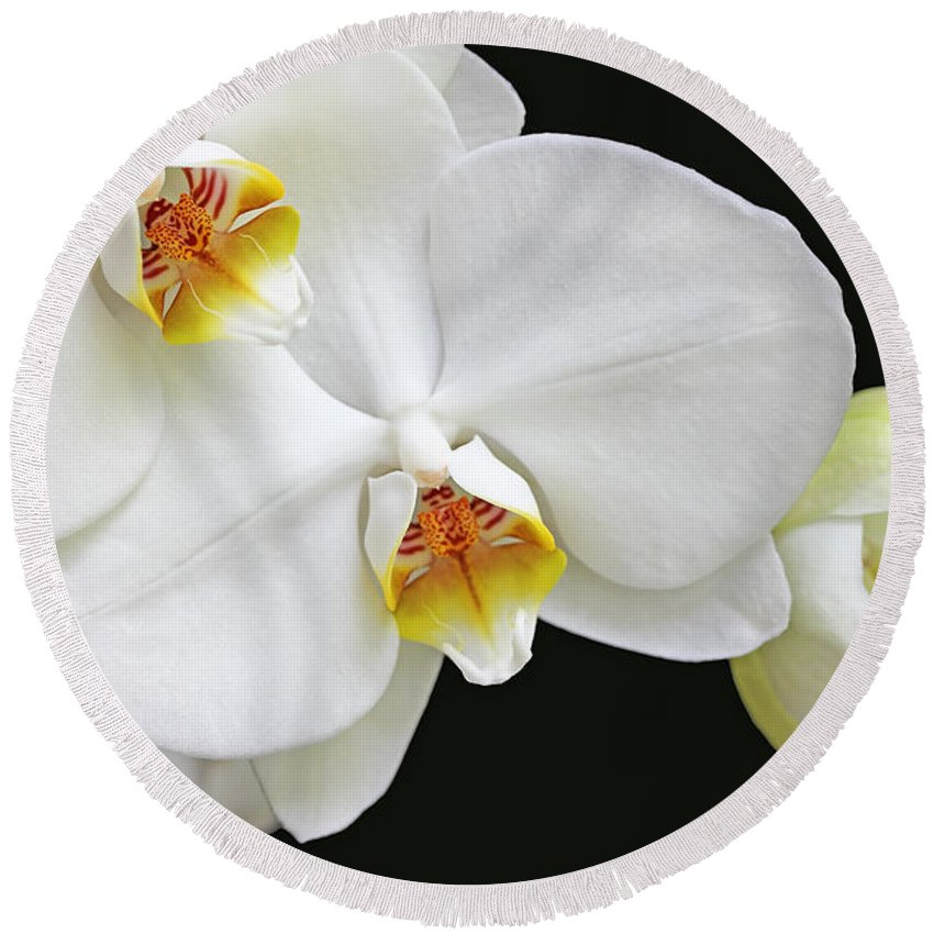 Orchid Round Beach Towel featuring the photograph White Phalaenopsis Orchid Flowers by Jennie Marie Schell