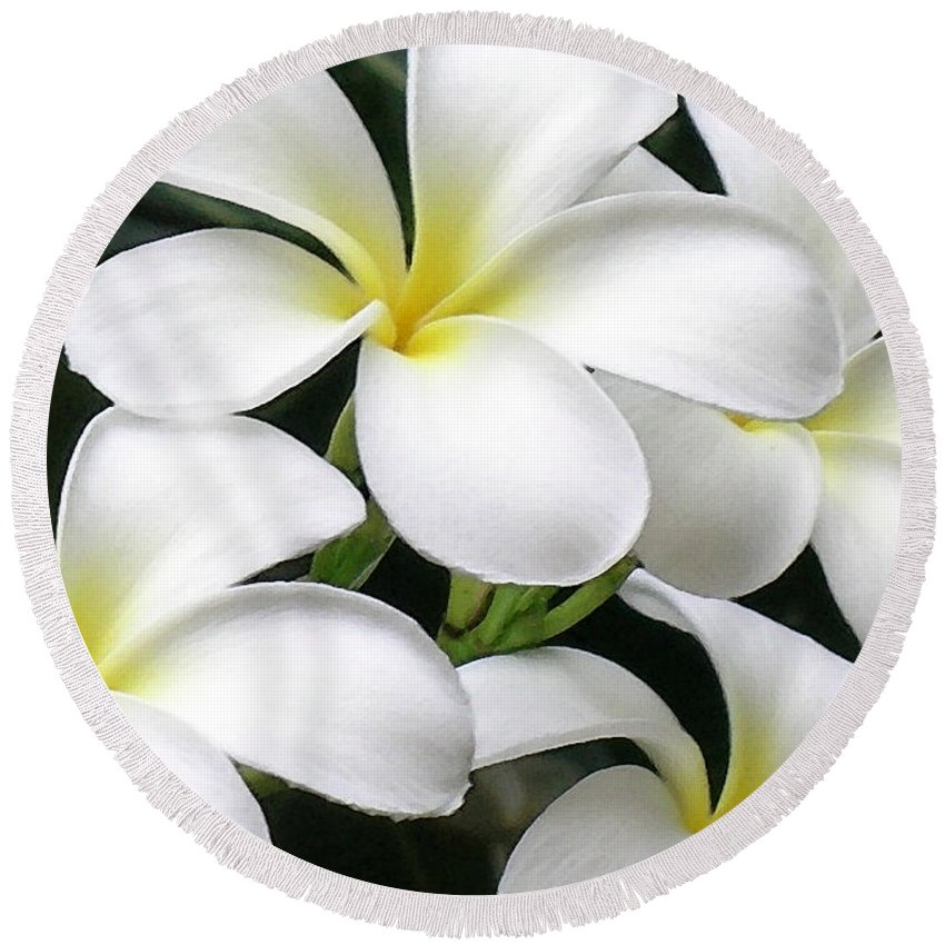Hawaii Iphone Cases Round Beach Towel featuring the photograph White Plumeria by James Temple