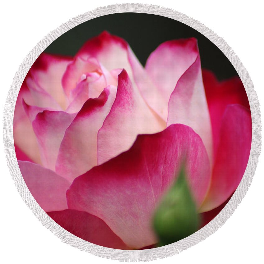 Rose Round Beach Towel featuring the photograph White Red Rose 01 by J M Lister