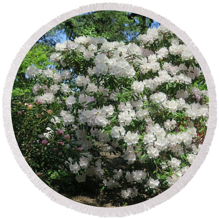 Garden Round Beach Towel featuring the photograph White Rhododendron Blooming In The Garden by Lena Photo Art