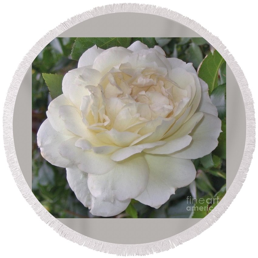 Rose Round Beach Towel featuring the photograph White Rose by Graciela Castro