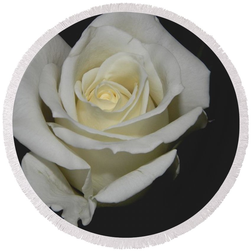 White Rose Round Beach Towel featuring the photograph White Rose by Owl's View Studio