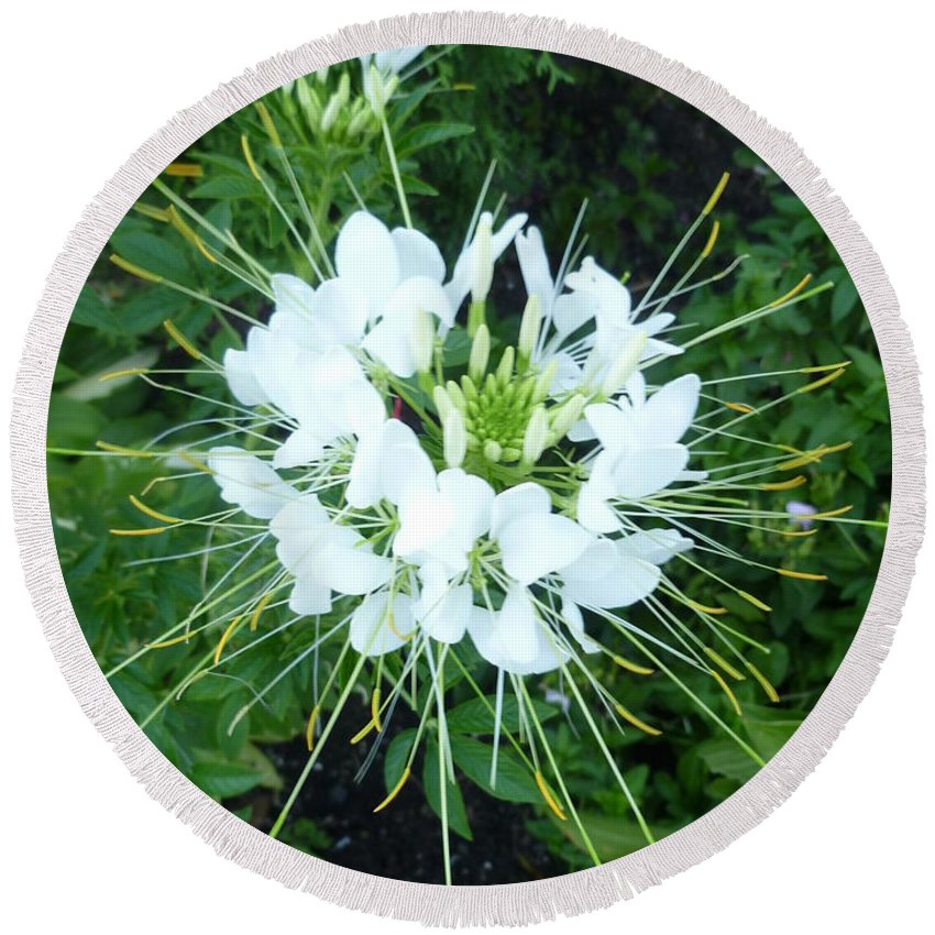 Flower Photograph Round Beach Towel featuring the photograph White Satellite by Lingfai Leung