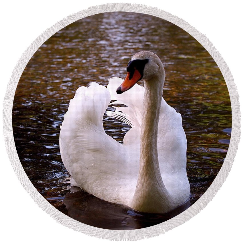 Swan Round Beach Towel featuring the photograph White Swan by Rona Black