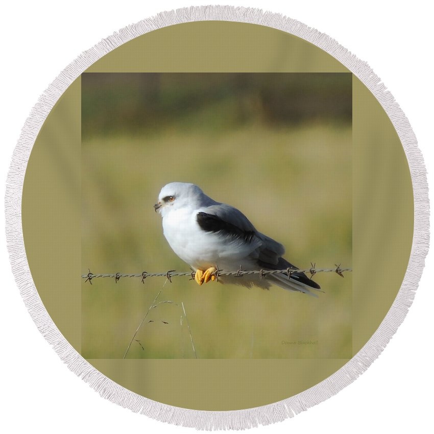 White Tailed Kite Round Beach Towel featuring the photograph White Tailed Kite by Donna Blackhall