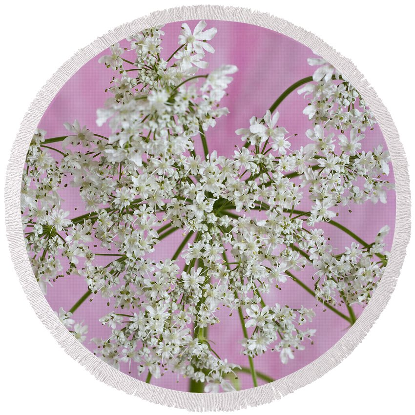 White Flower Round Beach Towel featuring the photograph White Wild Cow Parsnip Flower by Sandra Foster