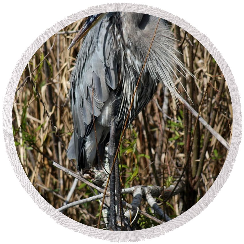 Great Blue Heron Round Beach Towel featuring the photograph Who Is There - Great Blue Heron by Christiane Schulze Art And Photography