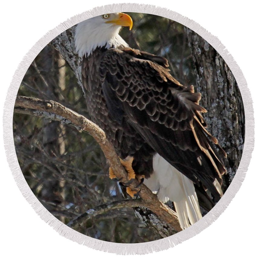 Maine Wildlife Round Beach Towel featuring the photograph Who Ruffled The Feathers by Sharon Fiedler