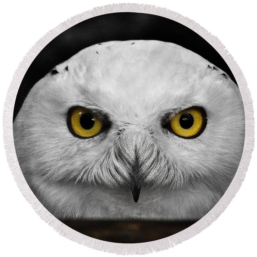 Whoooo's There? Round Beach Towel featuring the photograph Whoooo's There? by Wes and Dotty Weber