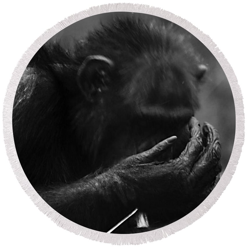 Chimpanzee Round Beach Towel featuring the photograph Whoops by Ken Frischkorn