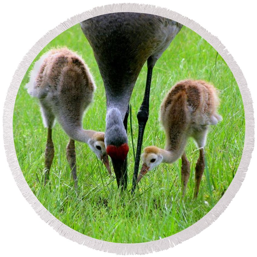 Sandhill Cranes Round Beach Towel featuring the photograph Who's First by Zina Stromberg