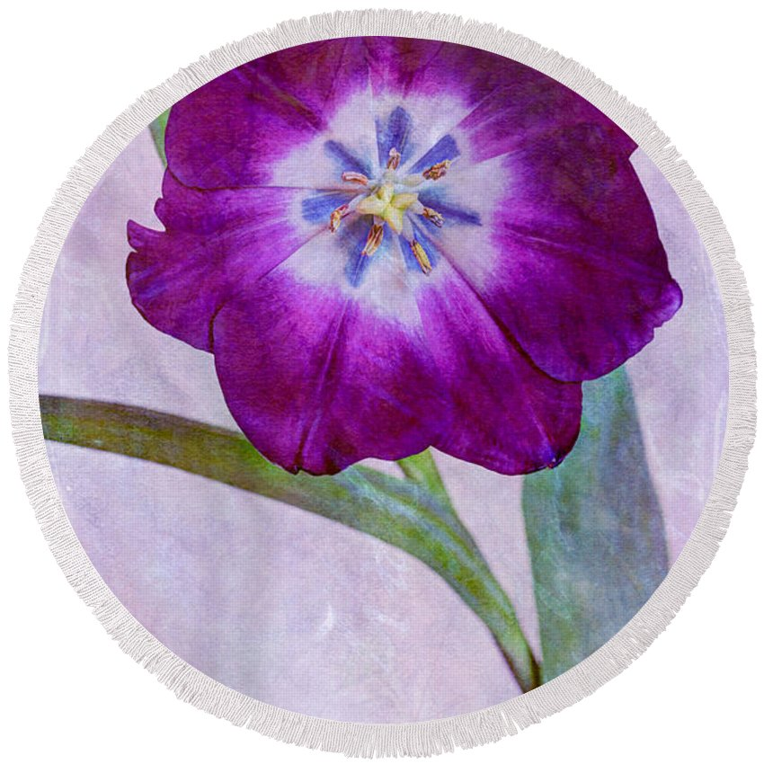 Purple Round Beach Towel featuring the photograph Wide Open Tulip by Heidi Smith