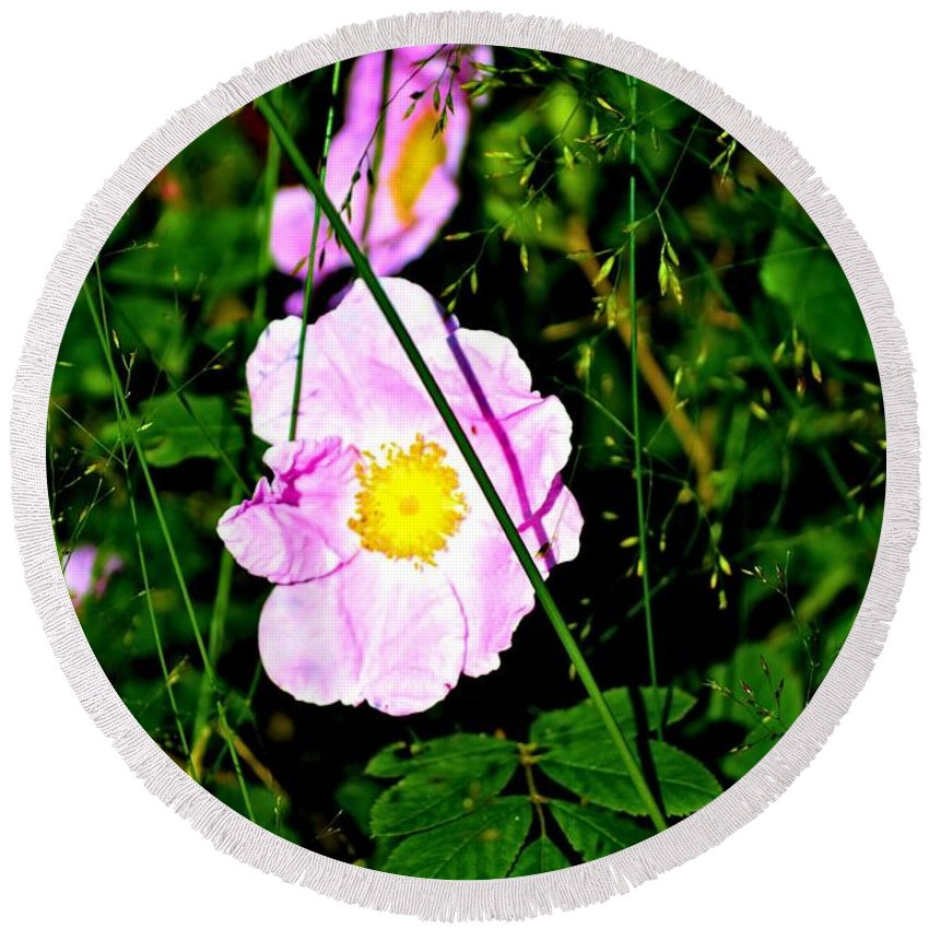 Wild Rose Round Beach Towel featuring the photograph Wild Rose by Tara Potts