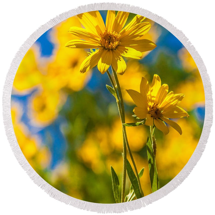 Flowers Round Beach Towel featuring the photograph Wildflowers Standing Out by Chad Dutson