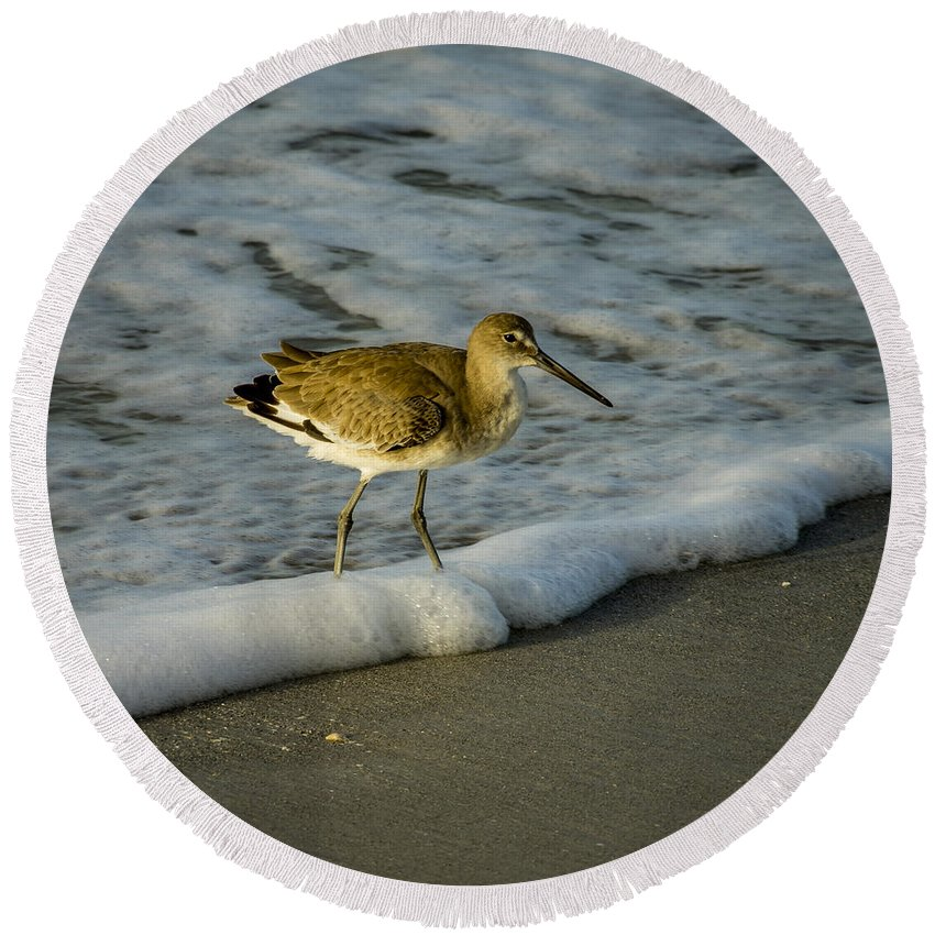 Avian Round Beach Towel featuring the photograph Willet Washing 5 by Nancy L Marshall