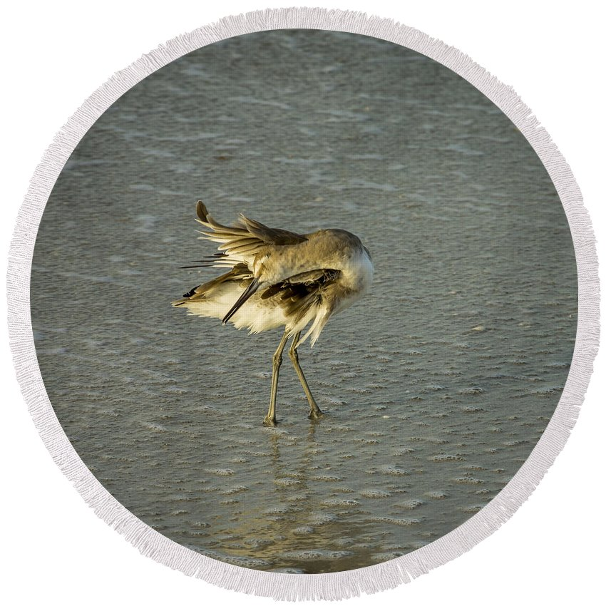 Avian Round Beach Towel featuring the photograph Willet Washing 6 by Nancy L Marshall