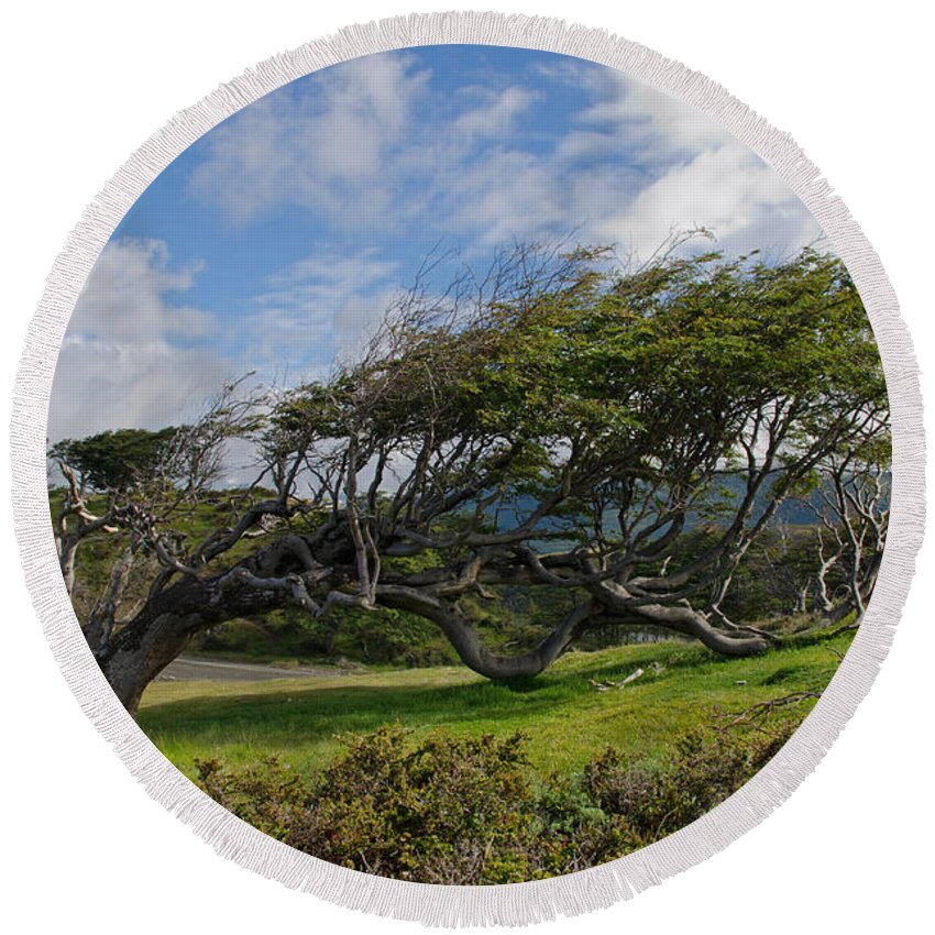 Sky Round Beach Towel featuring the photograph Wind-bent Tree In Tierra Del Fuego Patagonia by Ralf Broskvar