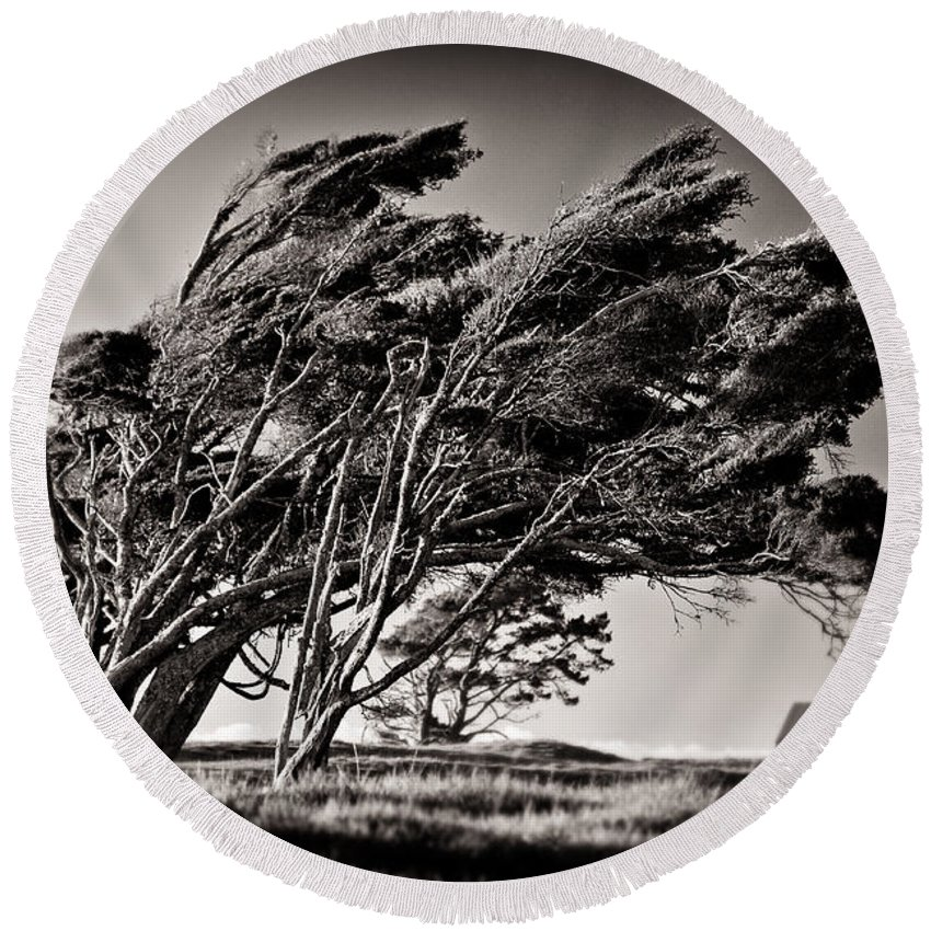 Windswept Trees Round Beach Towel featuring the photograph Windswept by Dave Bowman